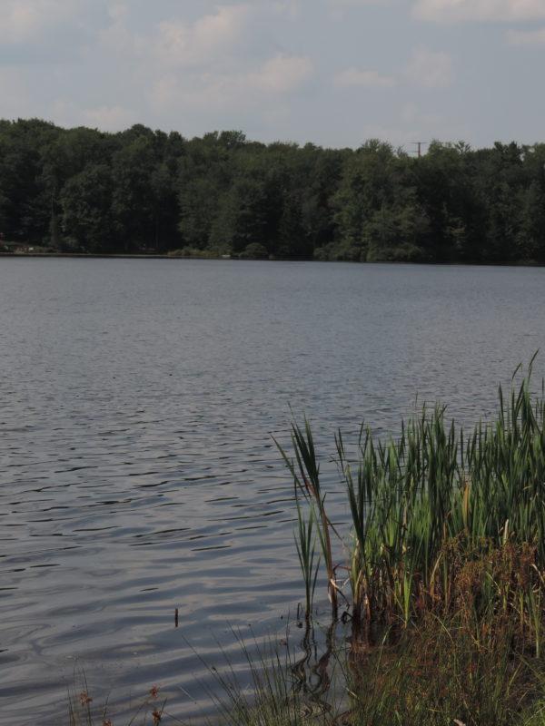69 Lake Drive East 005